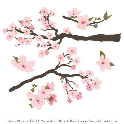 Free Cherry Blossom Clipart 2