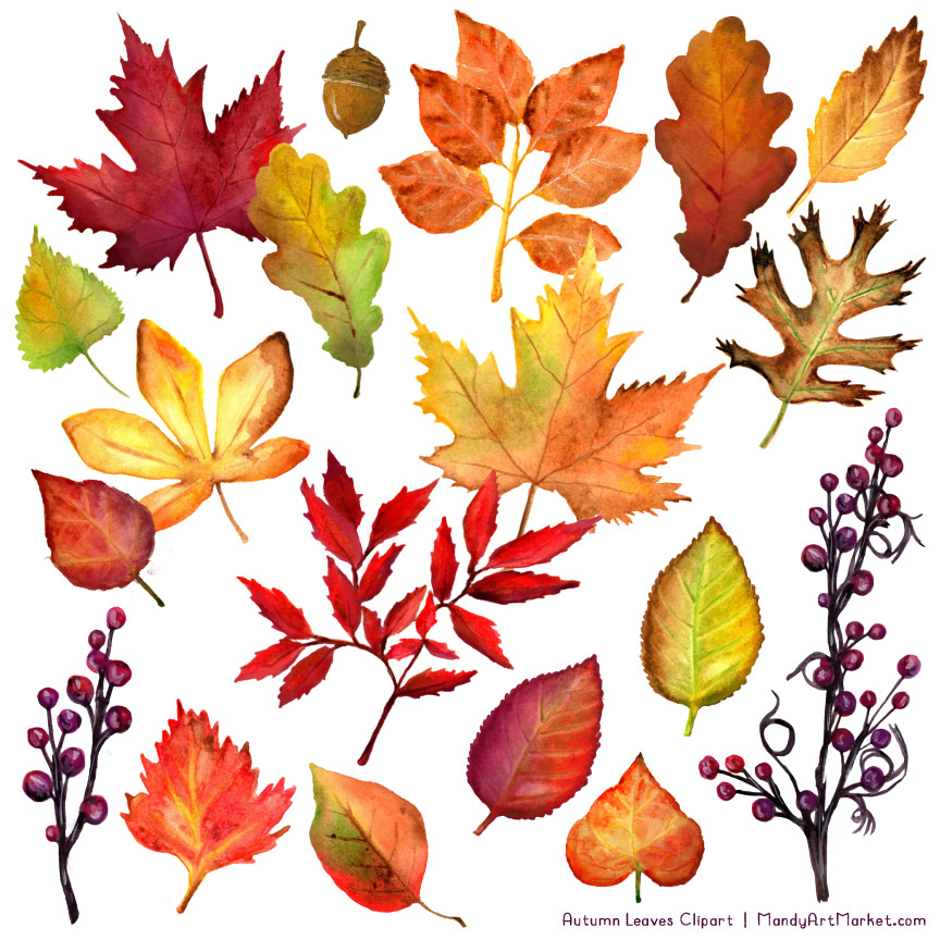 Leaves & Branches Clipart In Natural