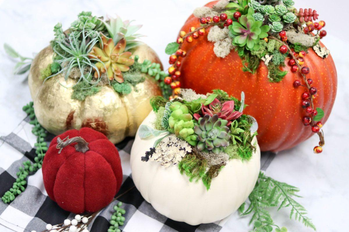 Succulent Pumpkins 1