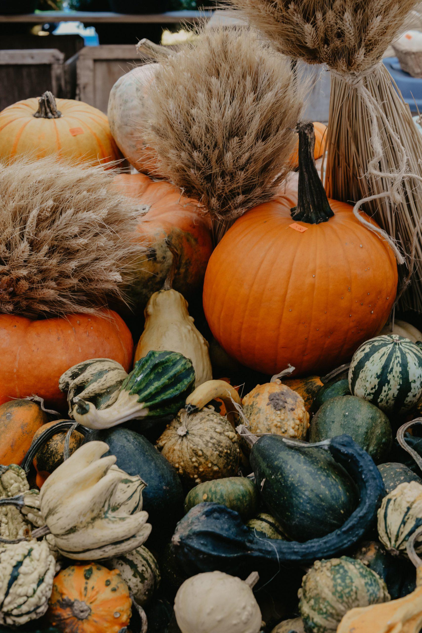 Photo of Autumn Harvest Pile