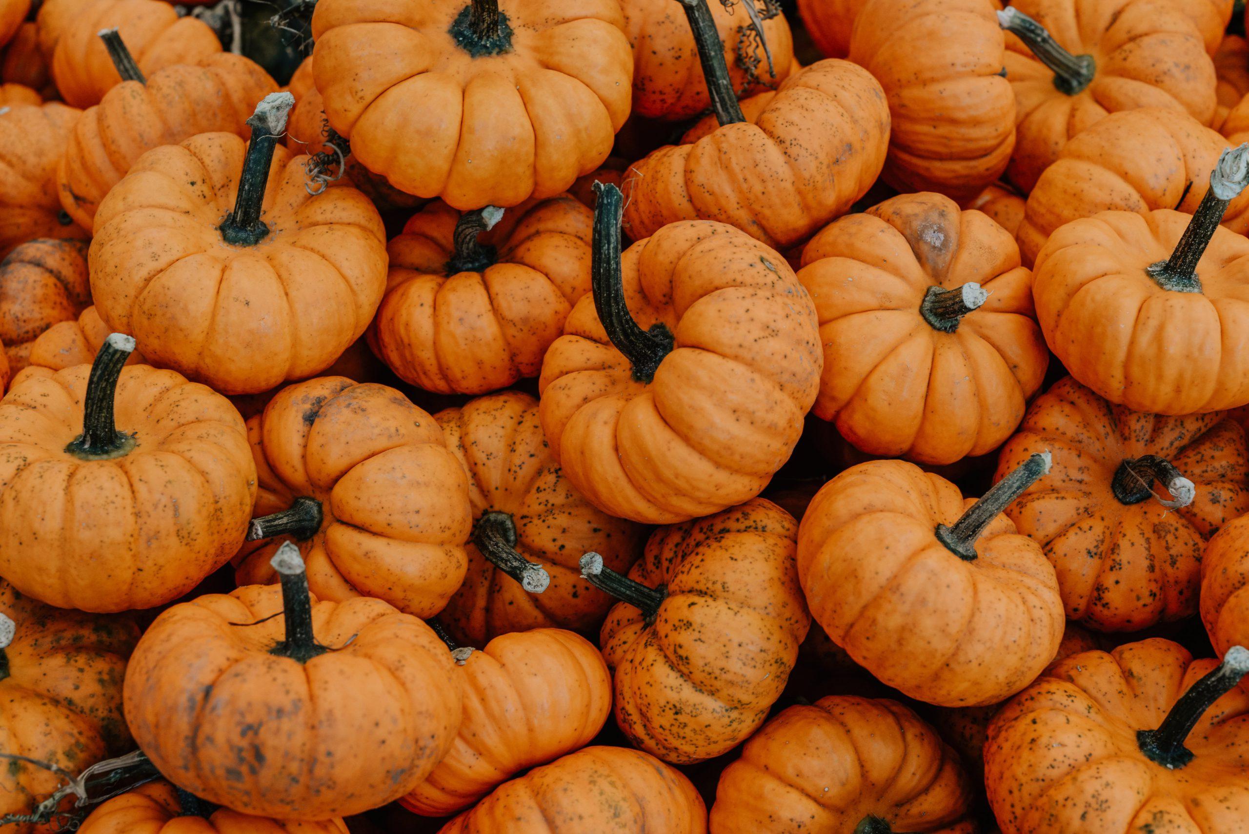 Photo of Small Pumpkins Close Up