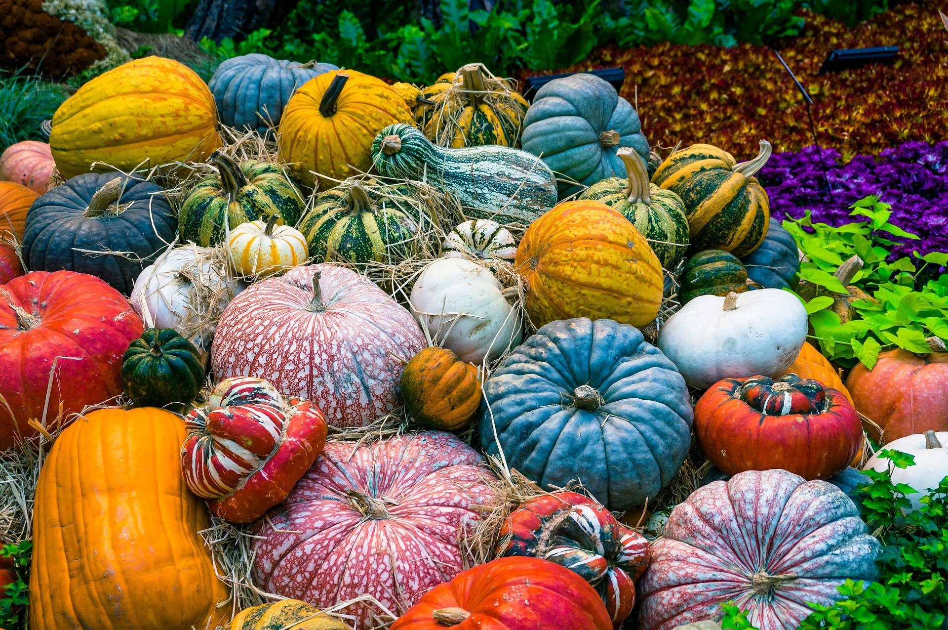 Photo of Colorful Pumpkins on the Ground