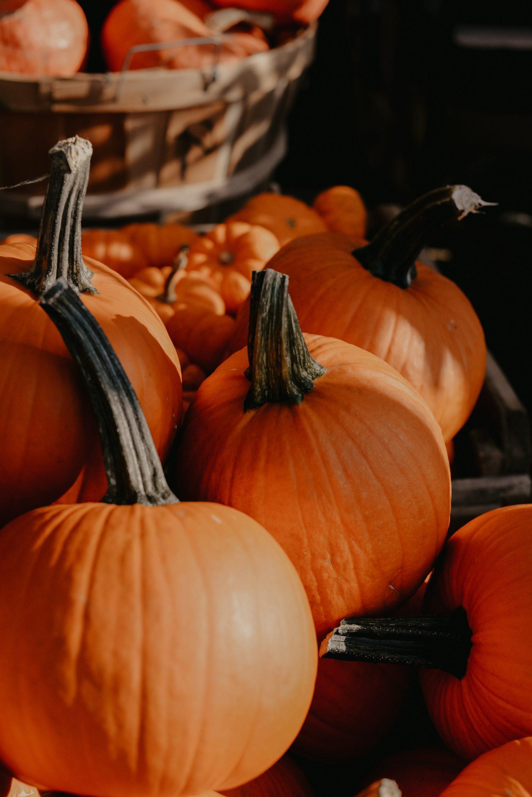 Photo of Pumpkins in Front of Basket