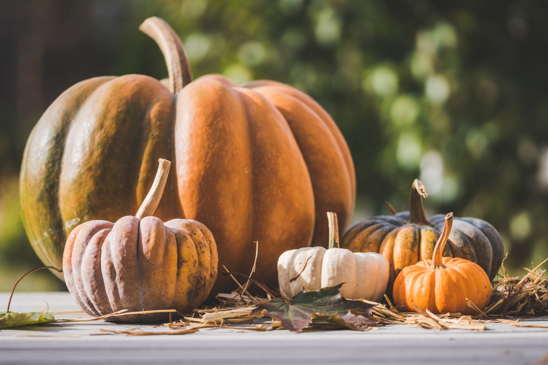 Photo of Five Pumpkins on a Table