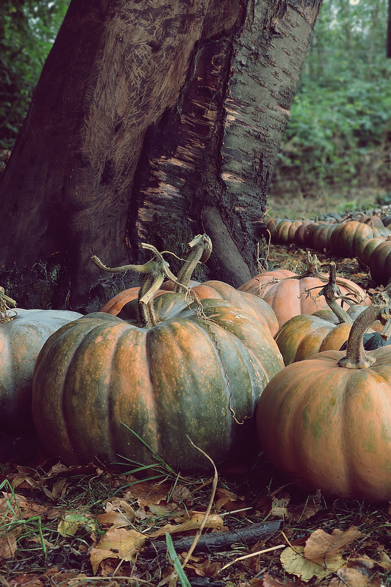 Photo of Pumpkins in the Forest