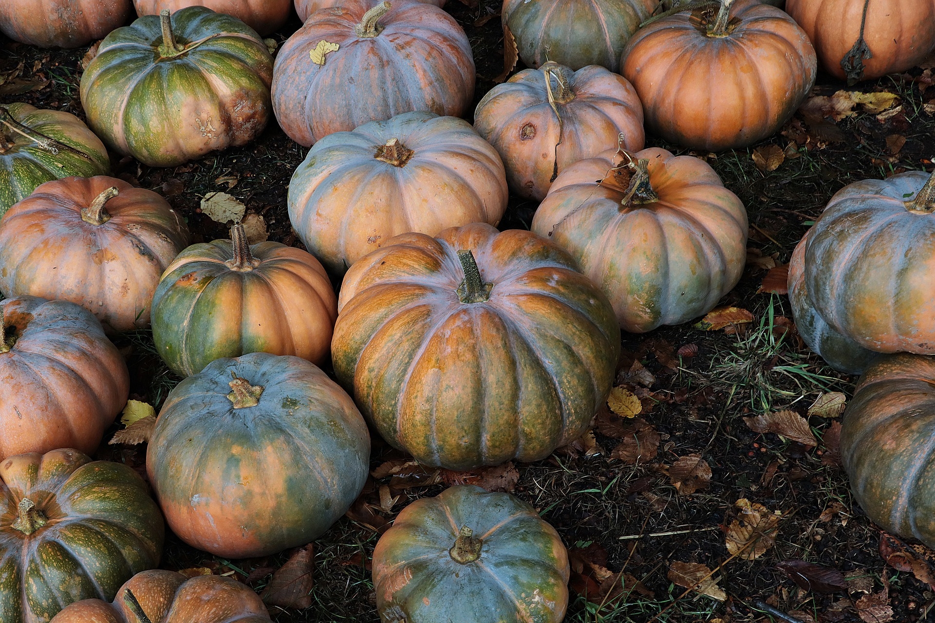 Photo of Green & Orange Pumpkins