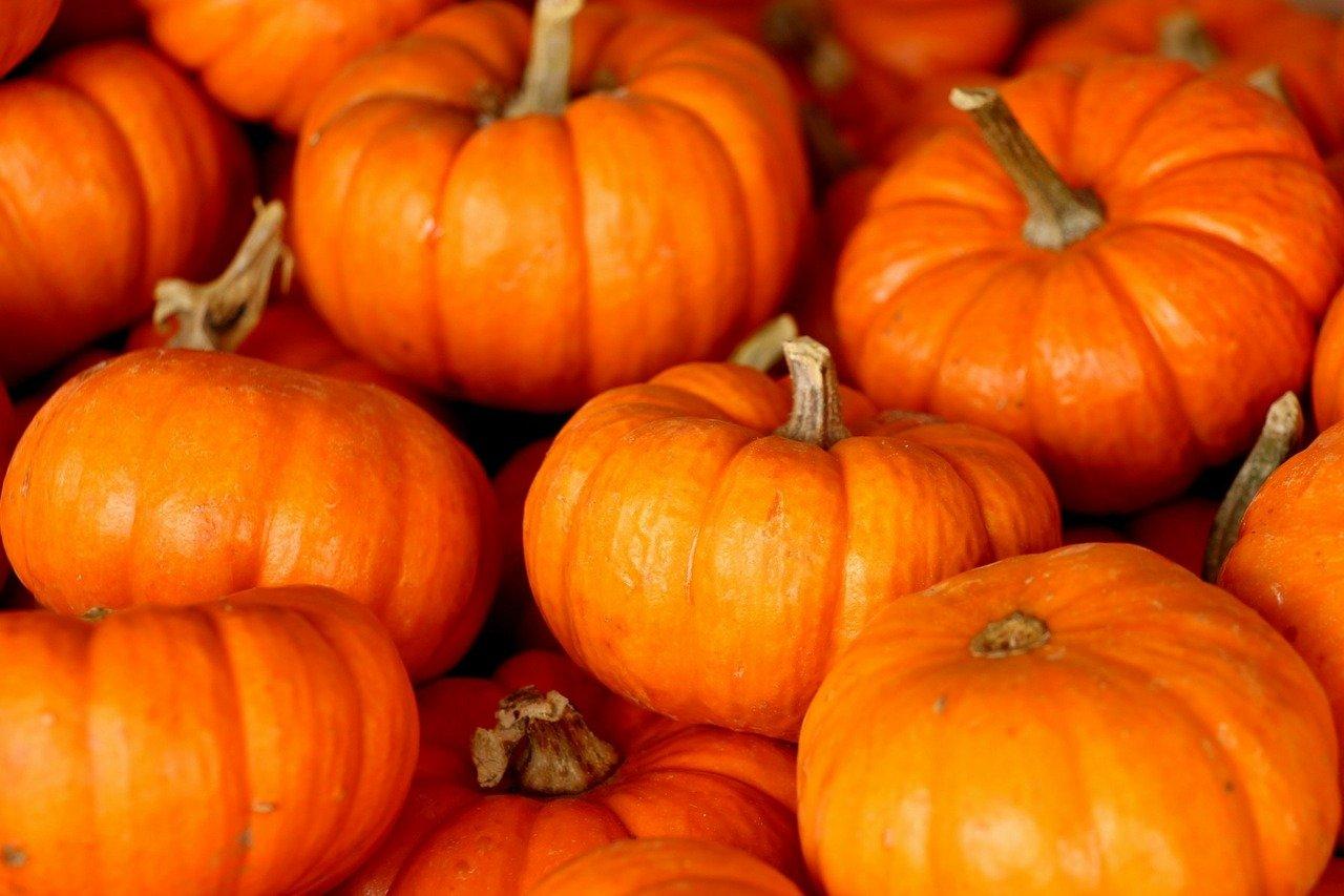 Photo of a Little Orange Pumpkin Pile