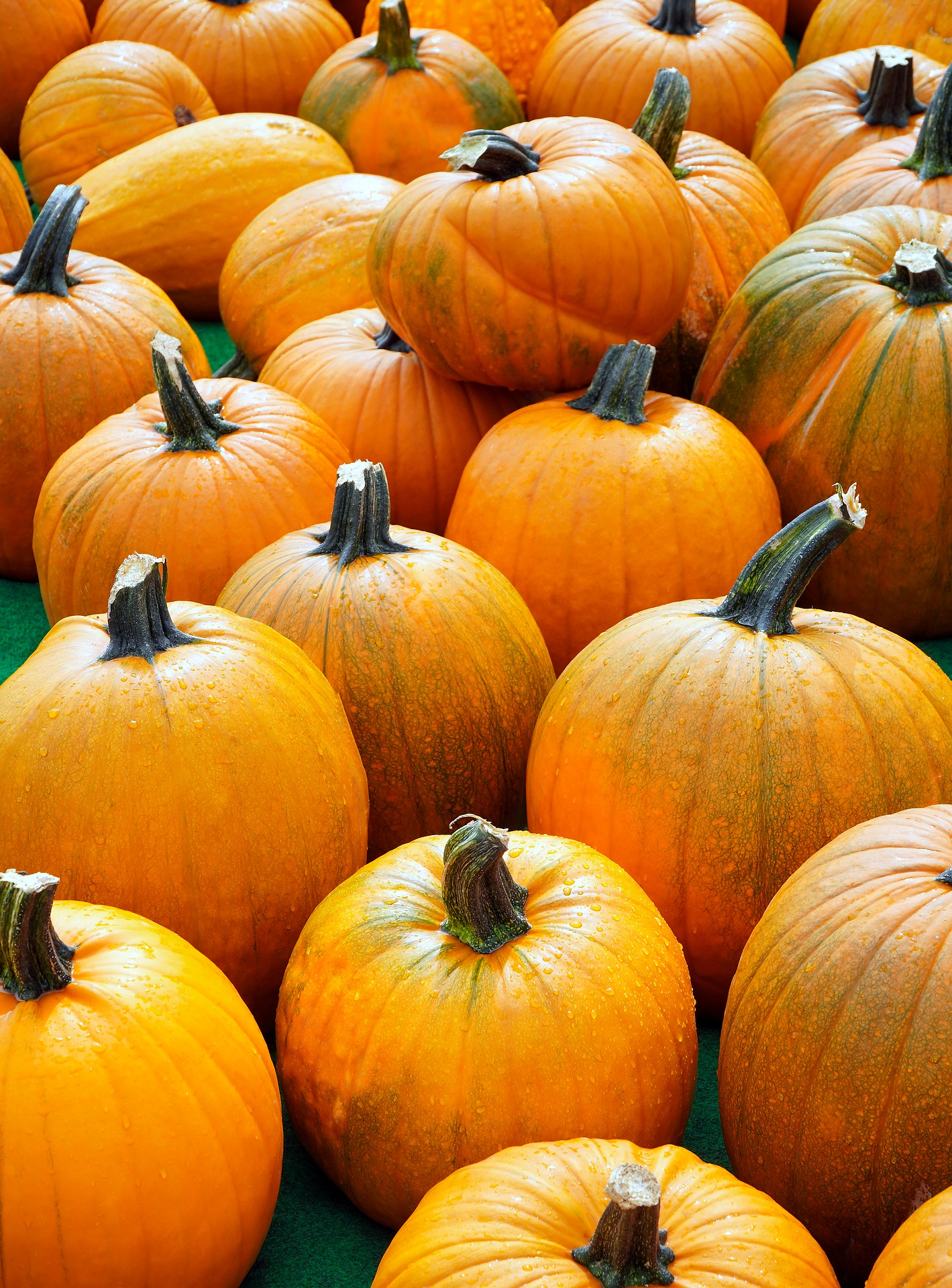 Photo of Lots of Pumpkins Sitting Together