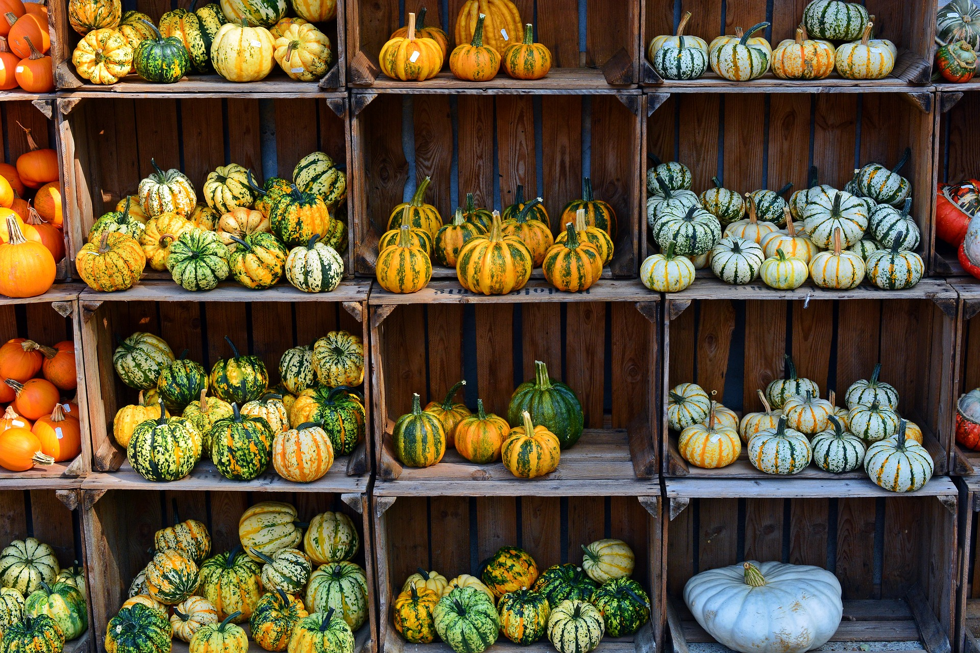 Photo of Small Pumpkins on Crate Shelves
