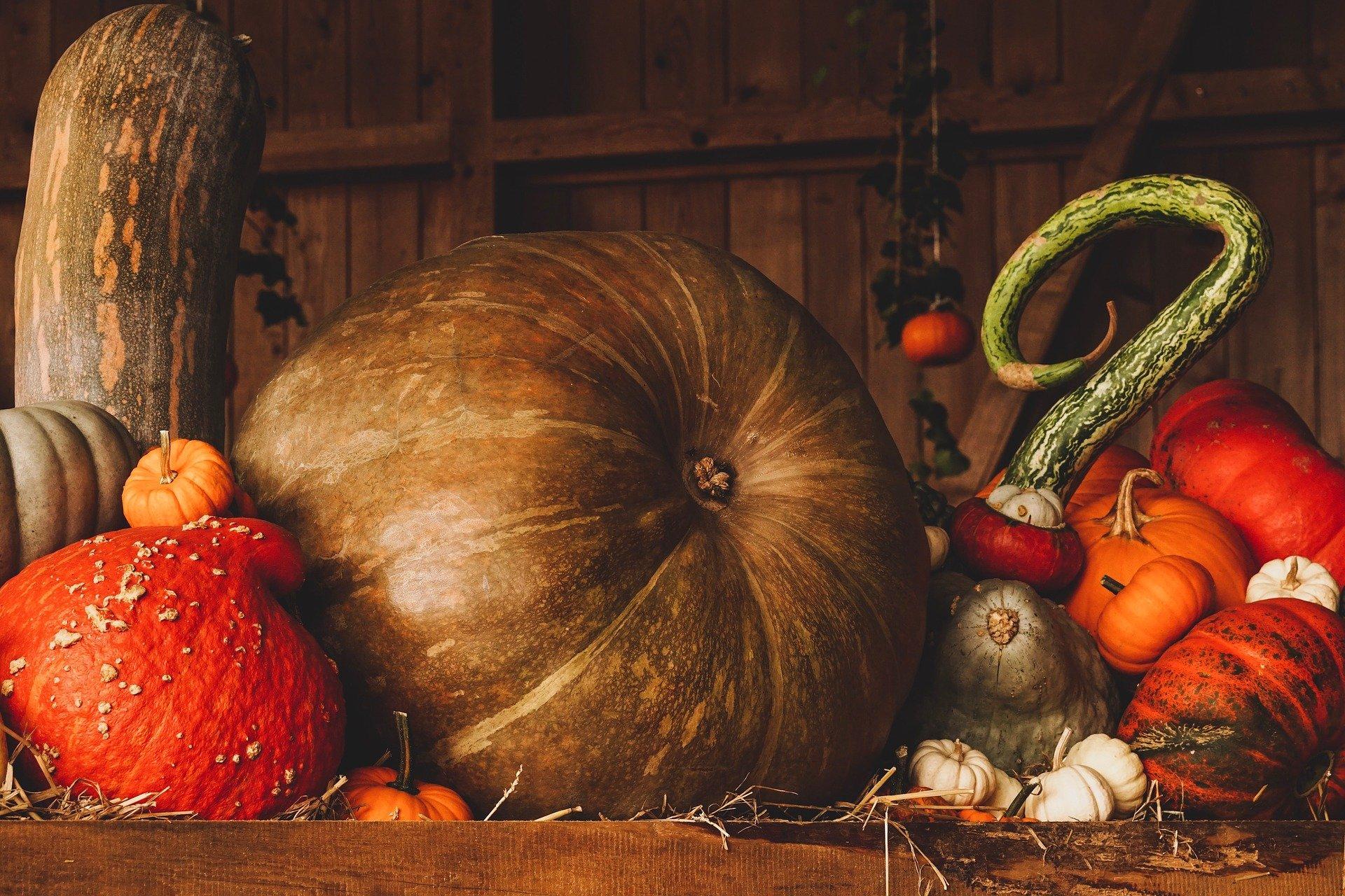 Photo of Harvest Vegetables
