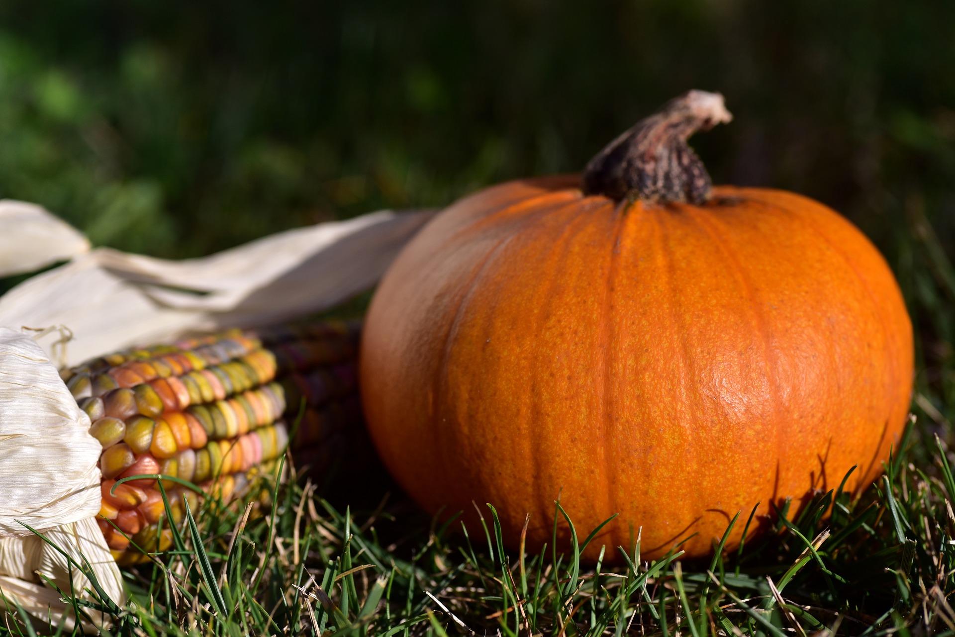 Photo of Pumpkin & Corn on the Grass