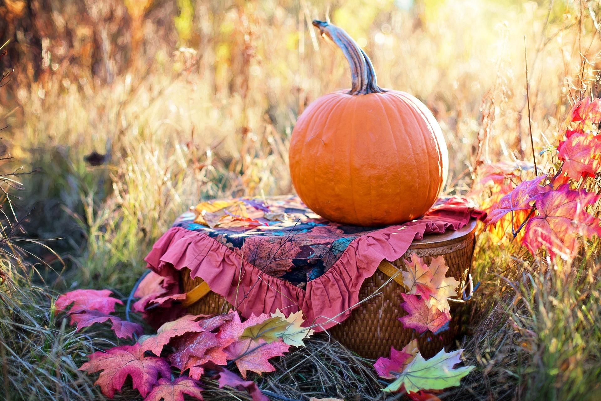 Photo of a Pumpkin in an Autumn Meadow