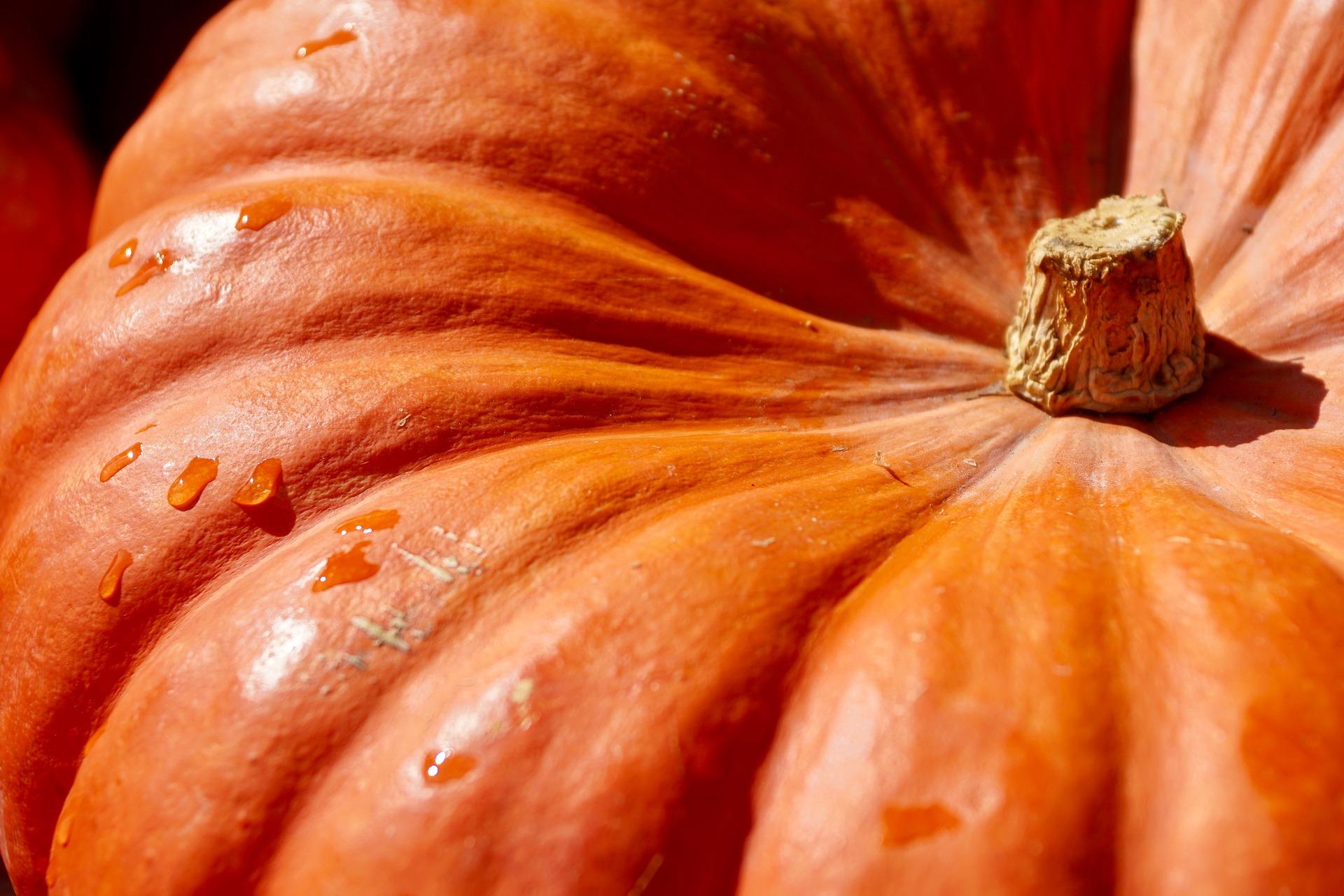 Photo of a Pumpkin Top Close Up