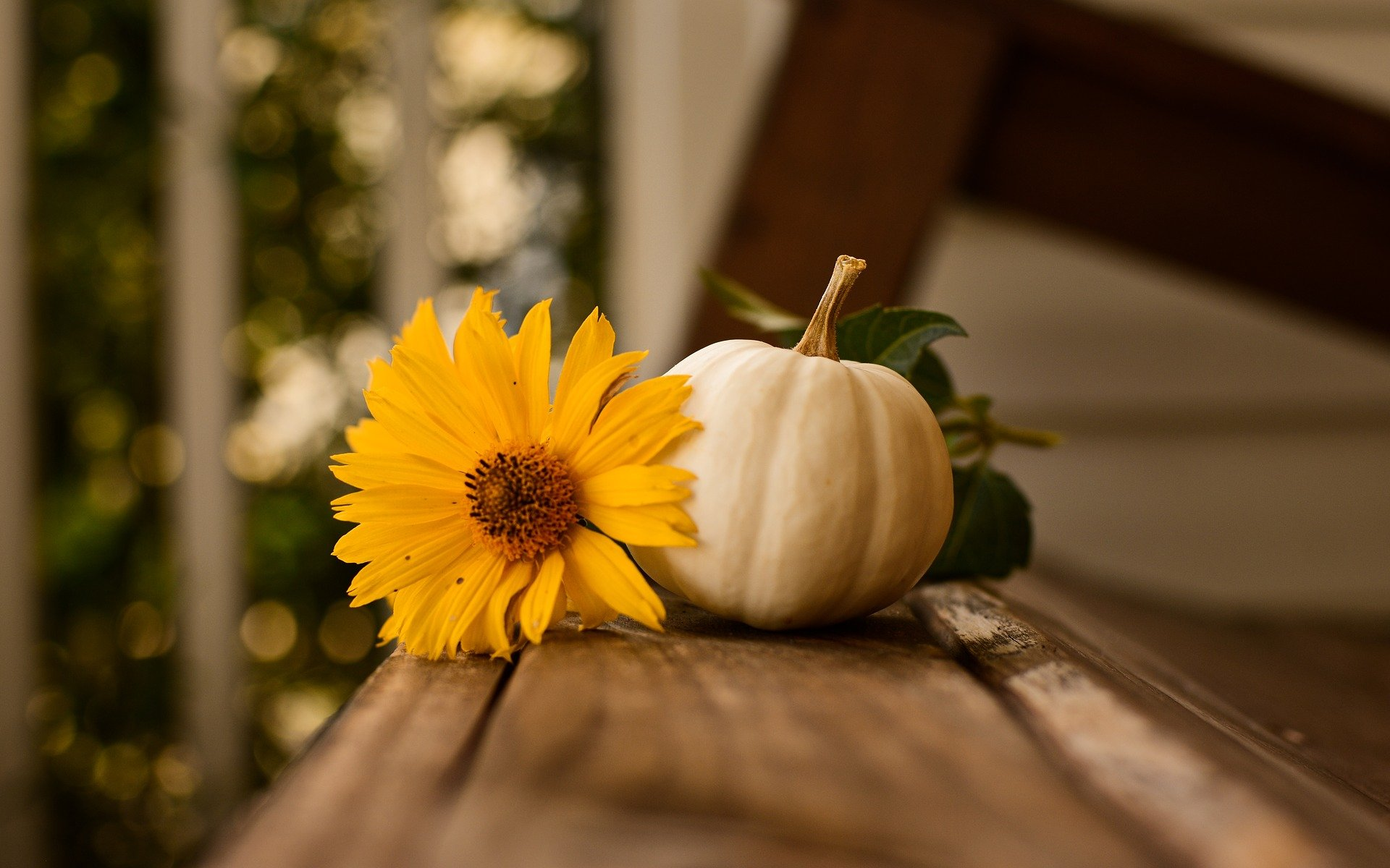 Photo of a Pumpkin with Yellow Flower