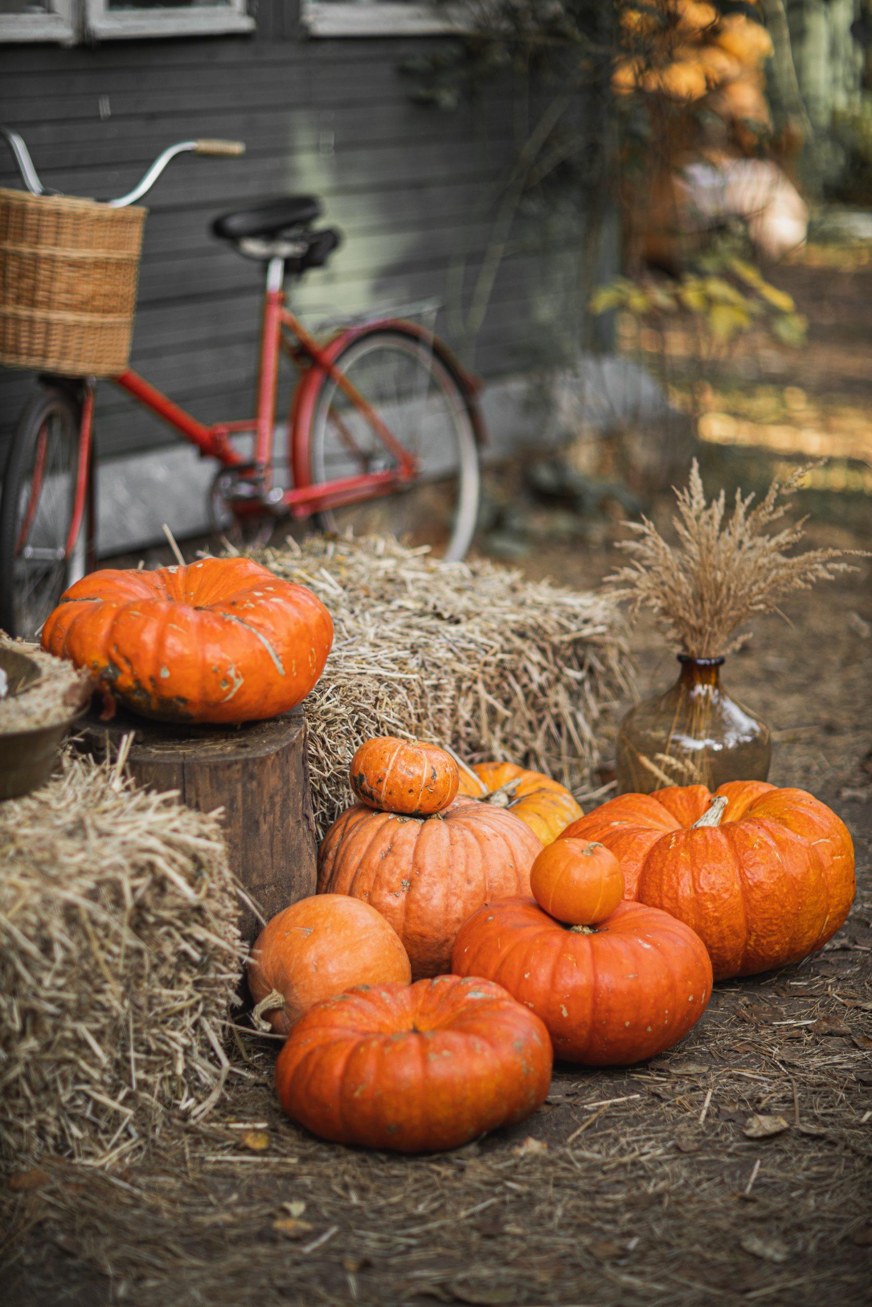 Photo of Orange Pumpkins & Hay Bales