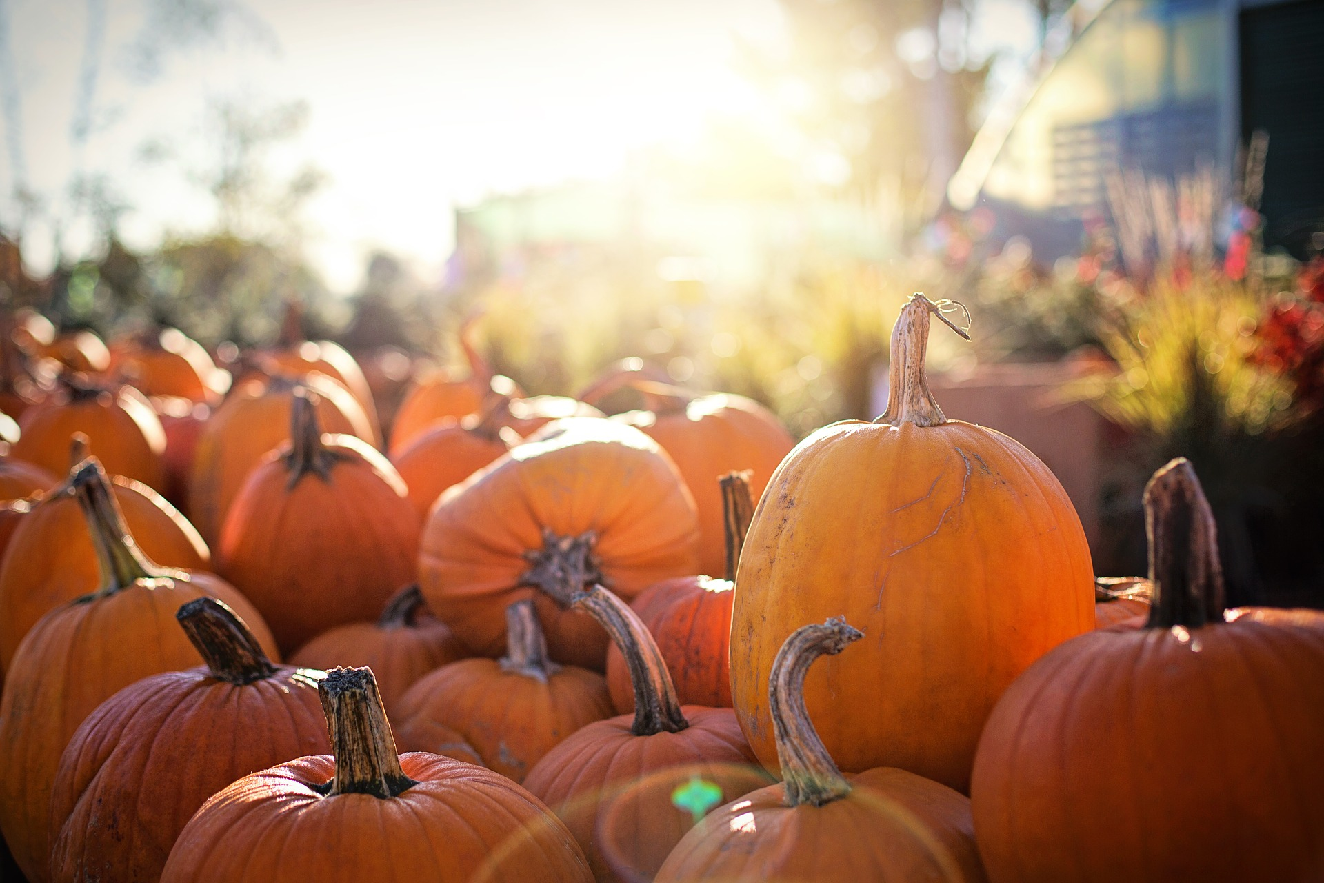 Photo of Pumpkins at Golden Hour
