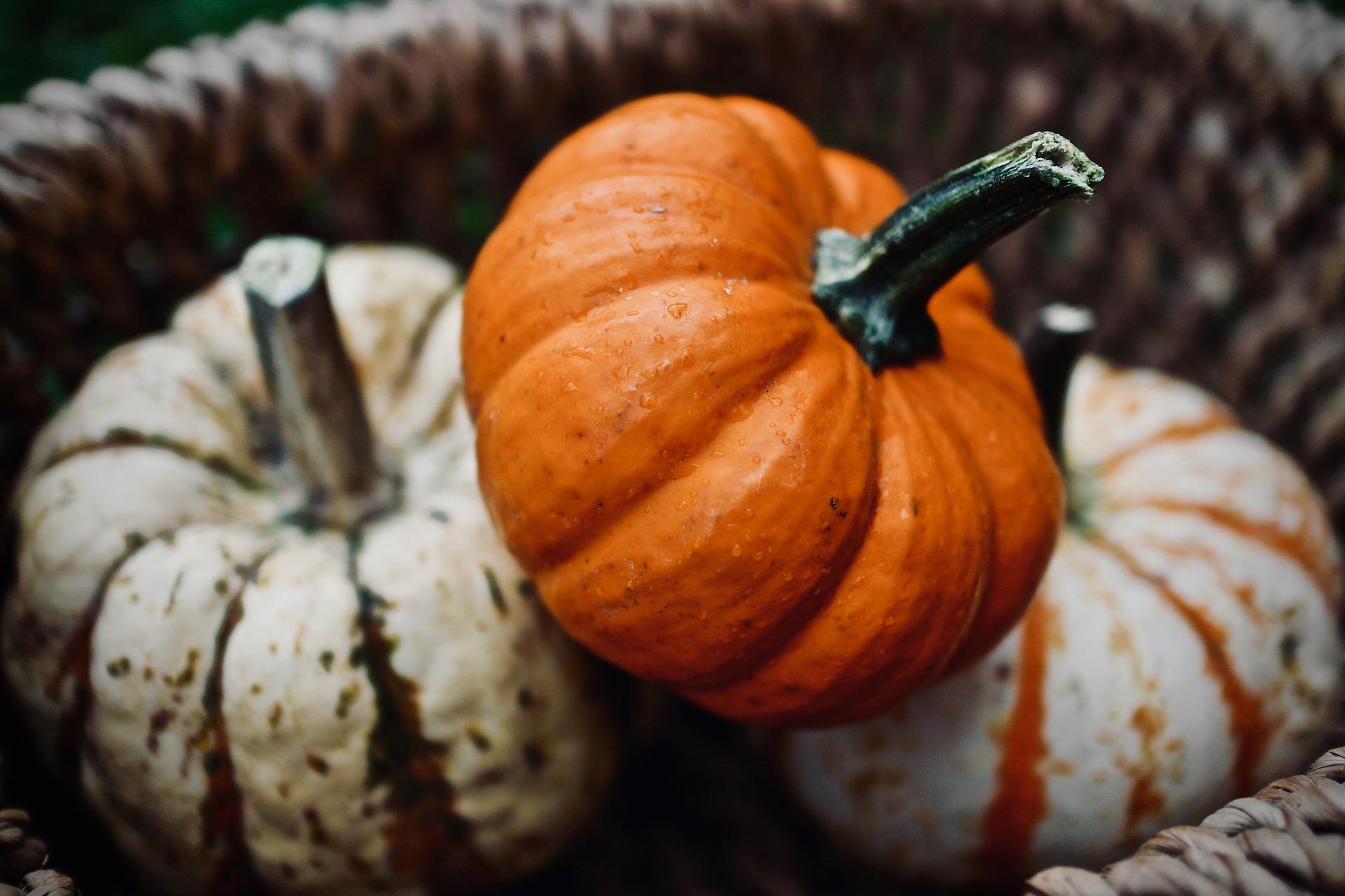 Photo of Pumpkins in a Brown Basket