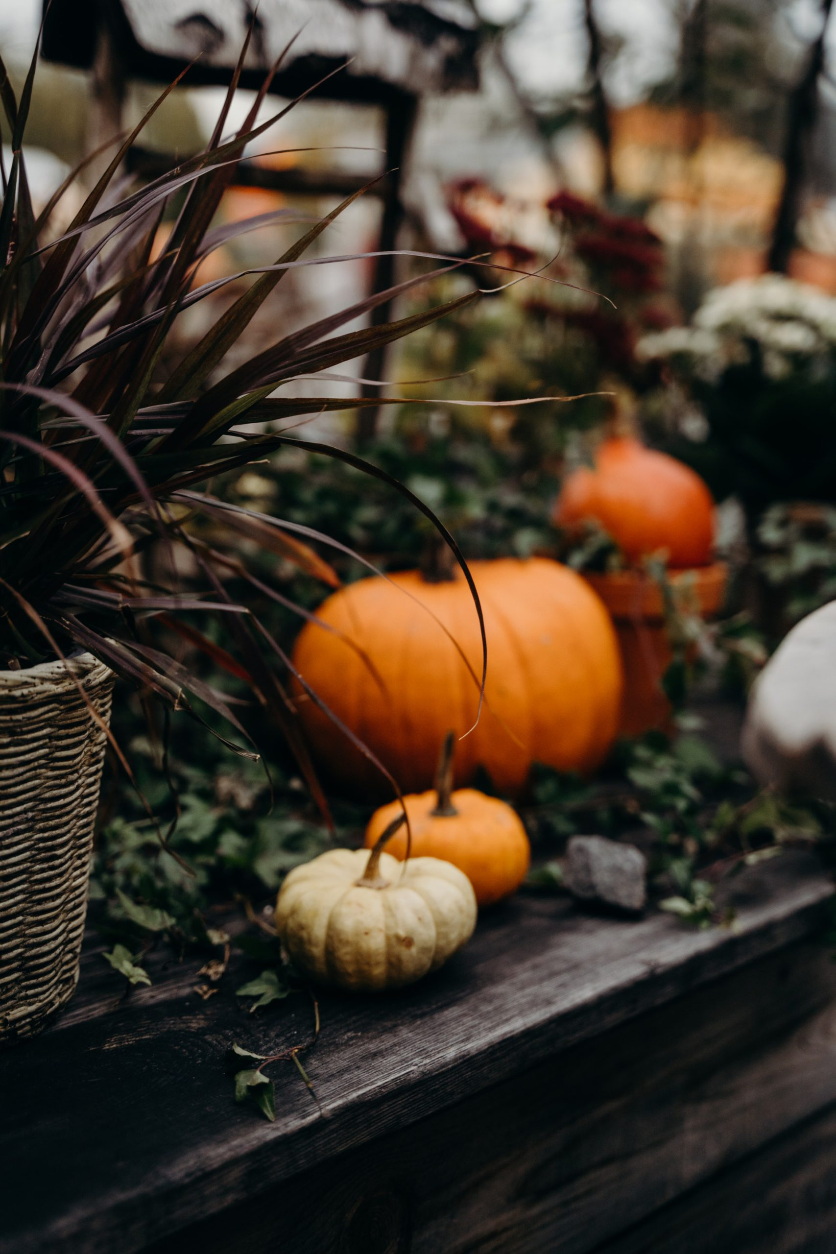 Photo of Pumpkins in Greenery