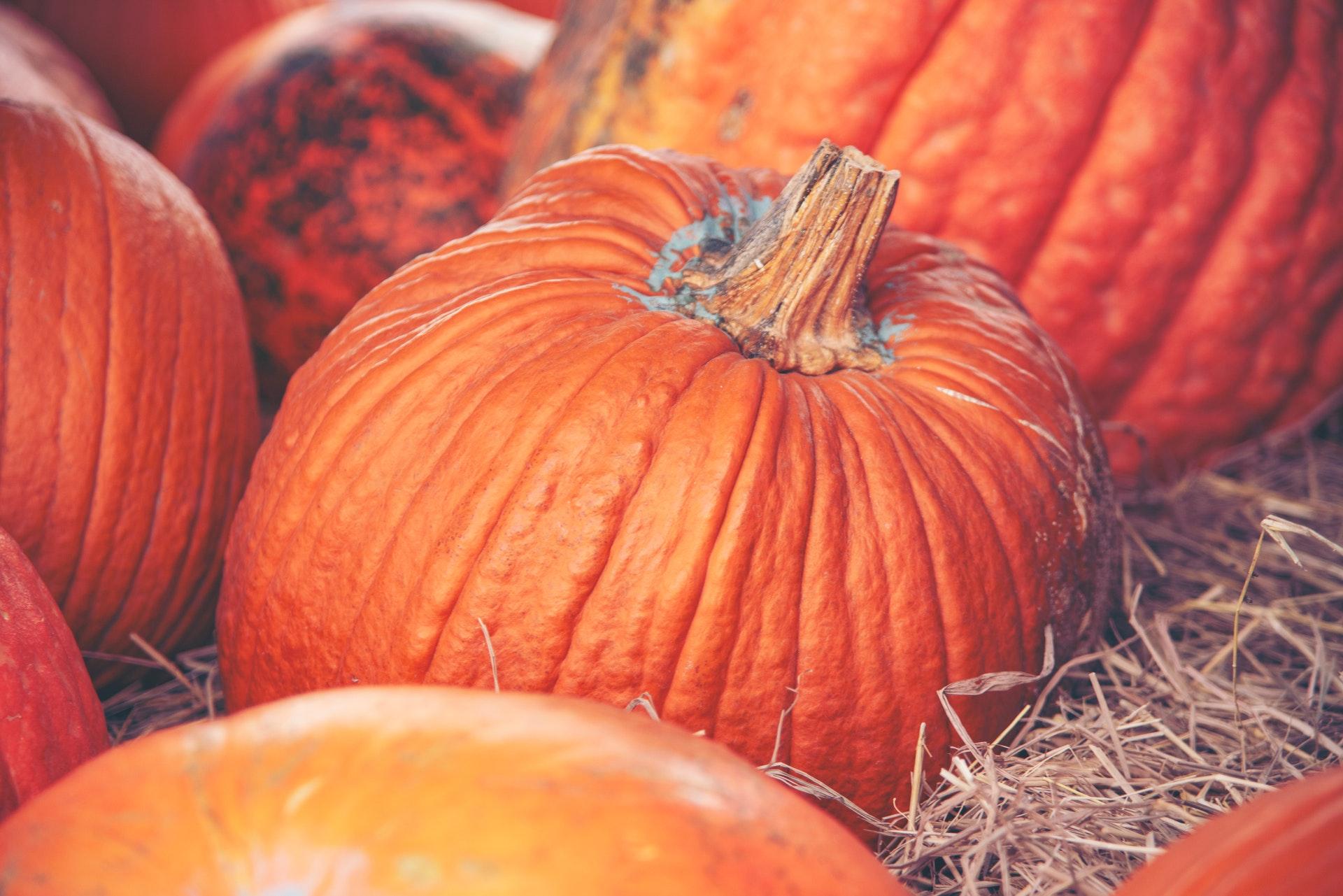 Photo of Large Pumpkins in Hay