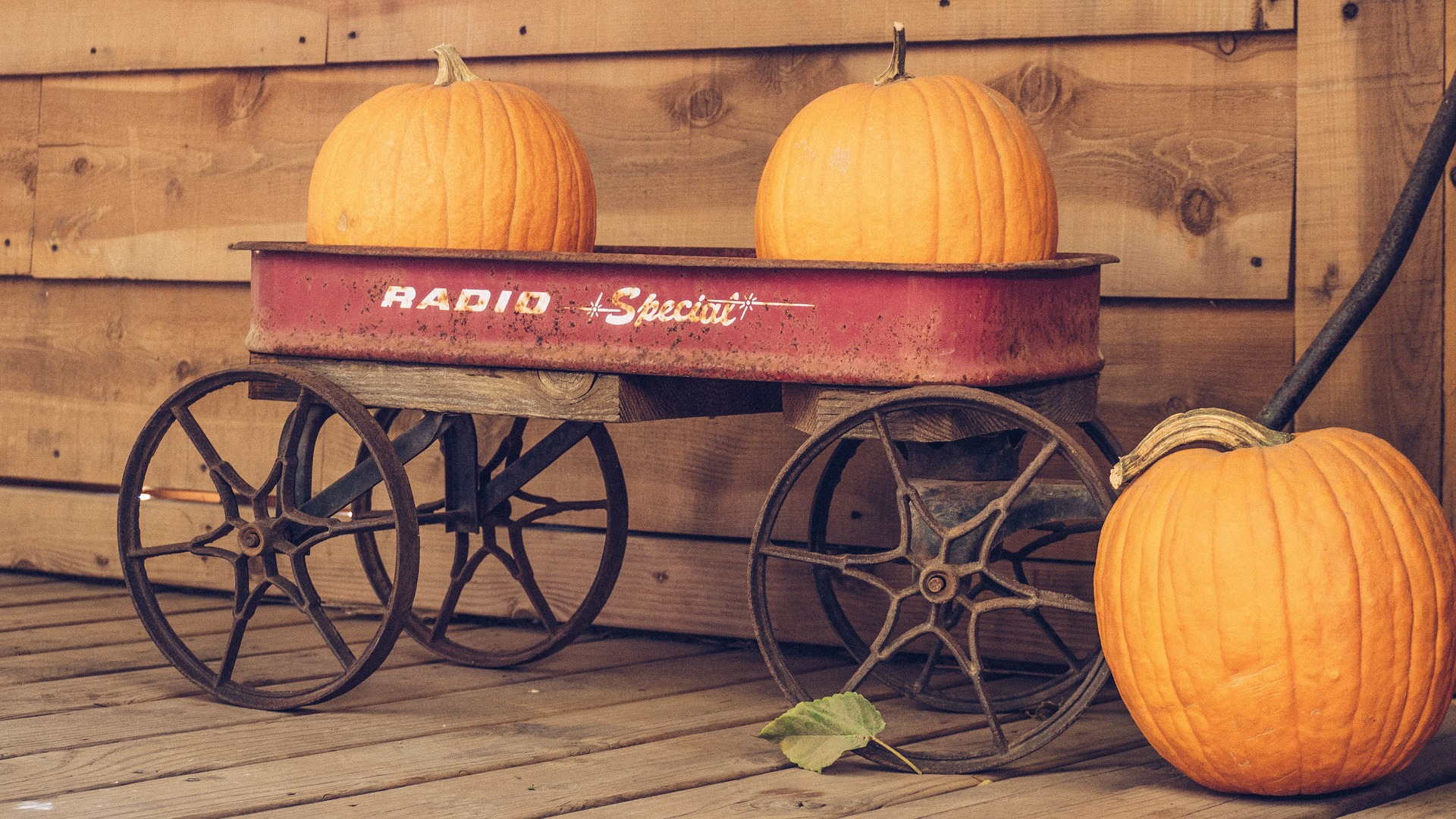 Photo of Two Pumpkins in a Wagon