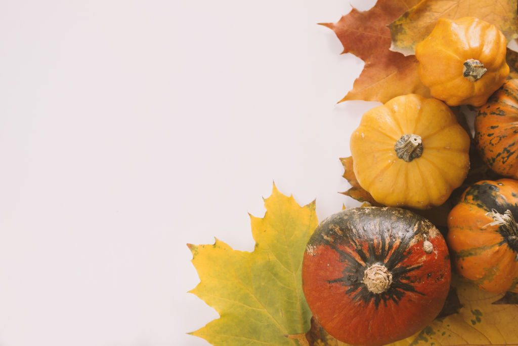 Photo of Pumpkins & Leaves on a White Background