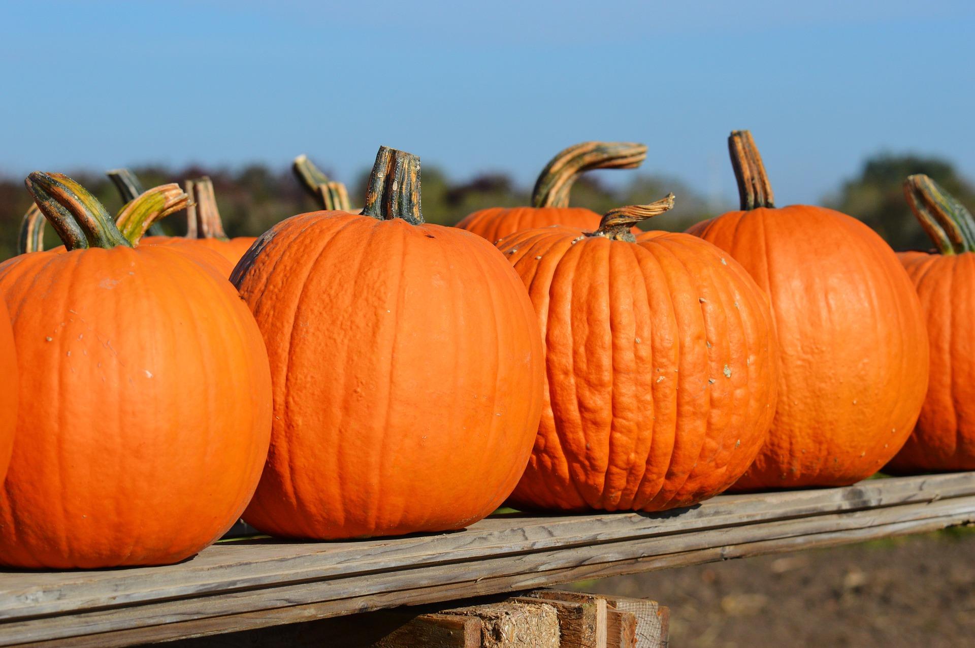 Photo of Pumpkins on a Fence
