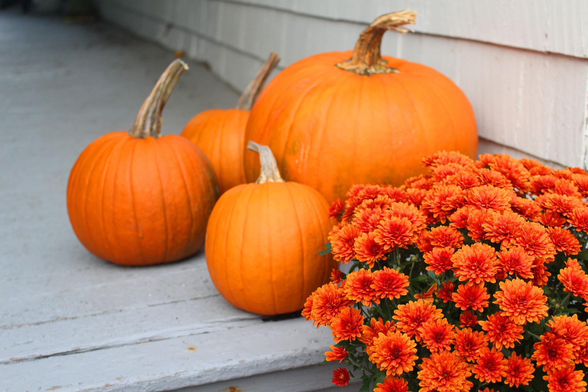 Photo of Pumpkins & Chrysanthemums