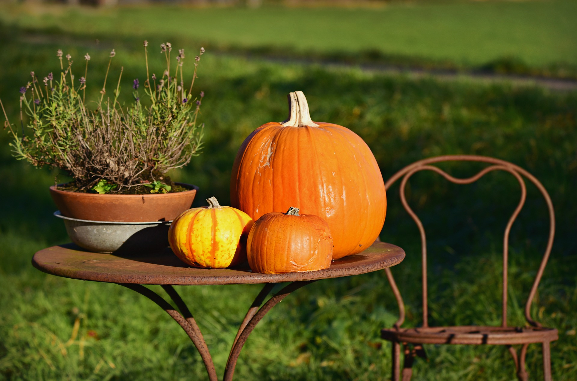 Photo of Pumpkins on a Rusty Table