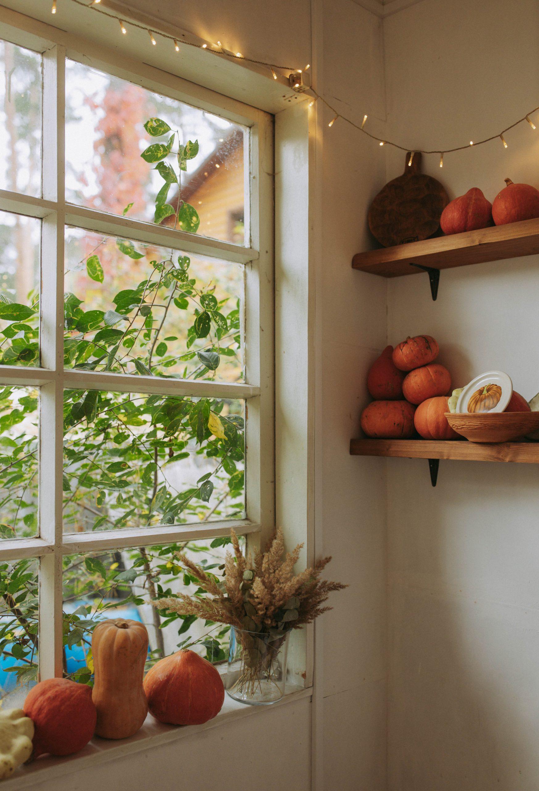 Photo of Pumpkins on a Window Sill