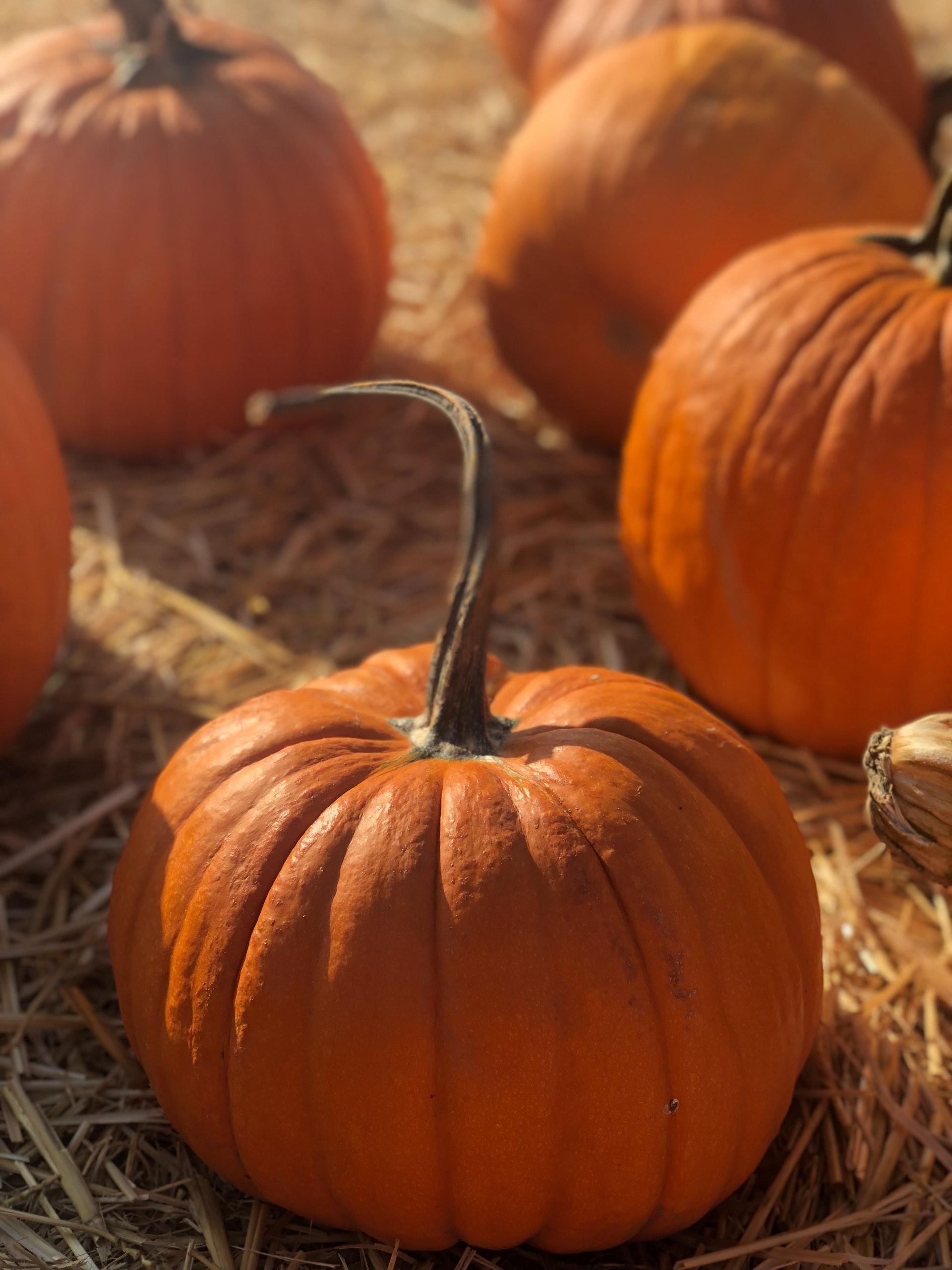 Photo of Pumpkins Sitting In Hay