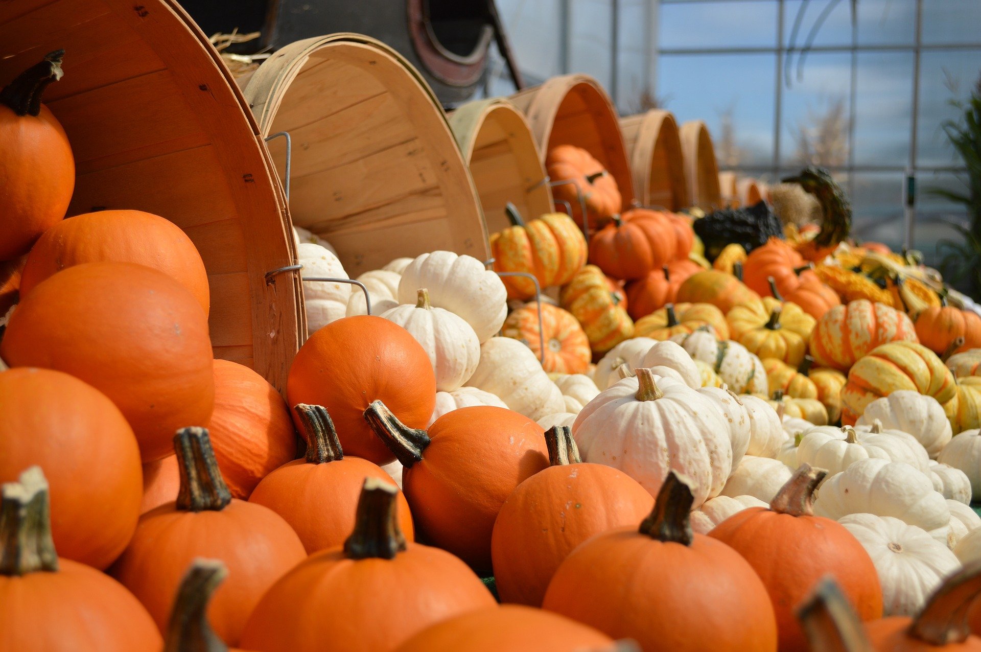 Photo of Pumpkins Spilling Out of Baskets