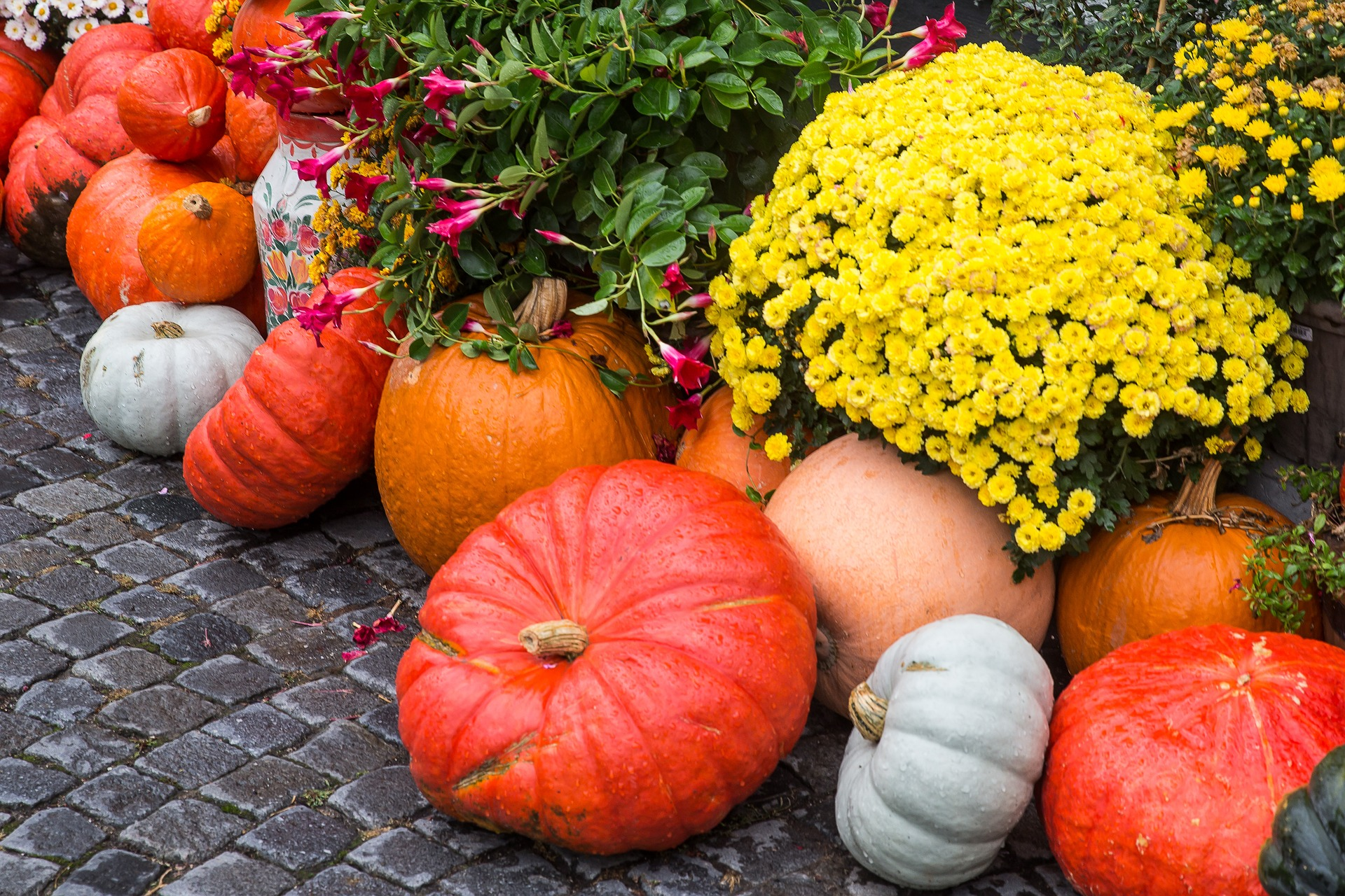 Photo of Pumpkins with Fall Flowers