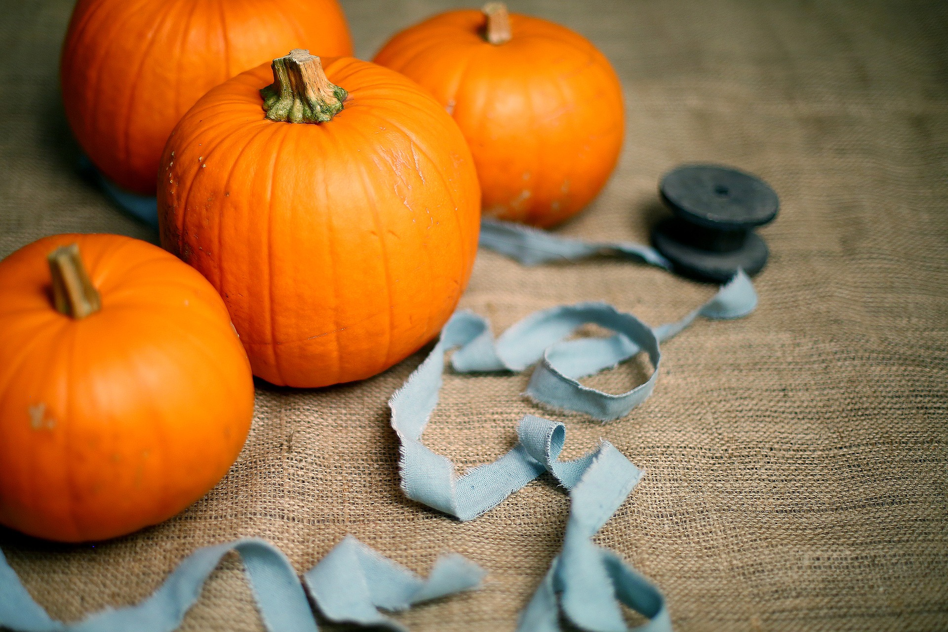 Photo of Pumpkins with Blue Ribbon on Burlap Fabric