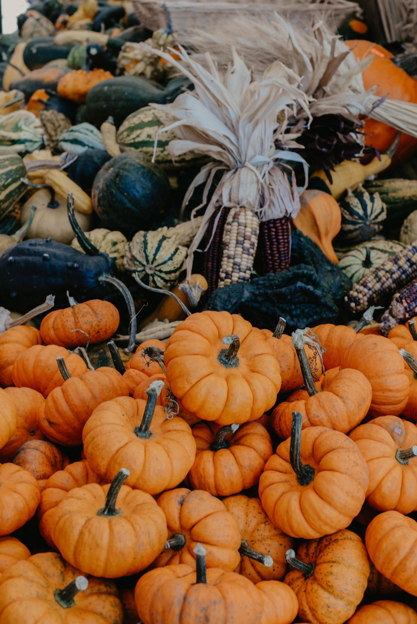 Photo of Small Pumpkins & Colorful Corn