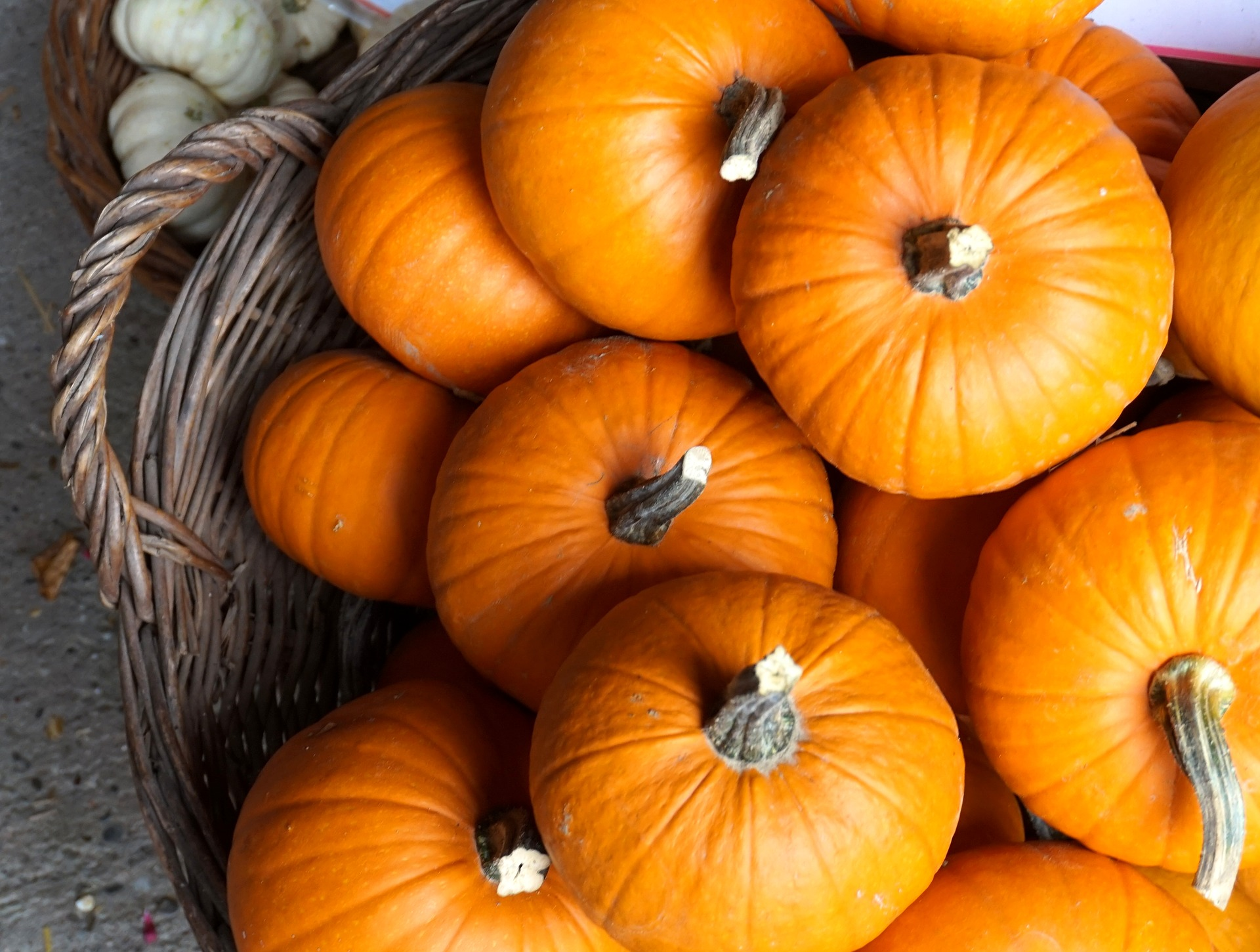 Photo of Basket Full of Small Pumpkins