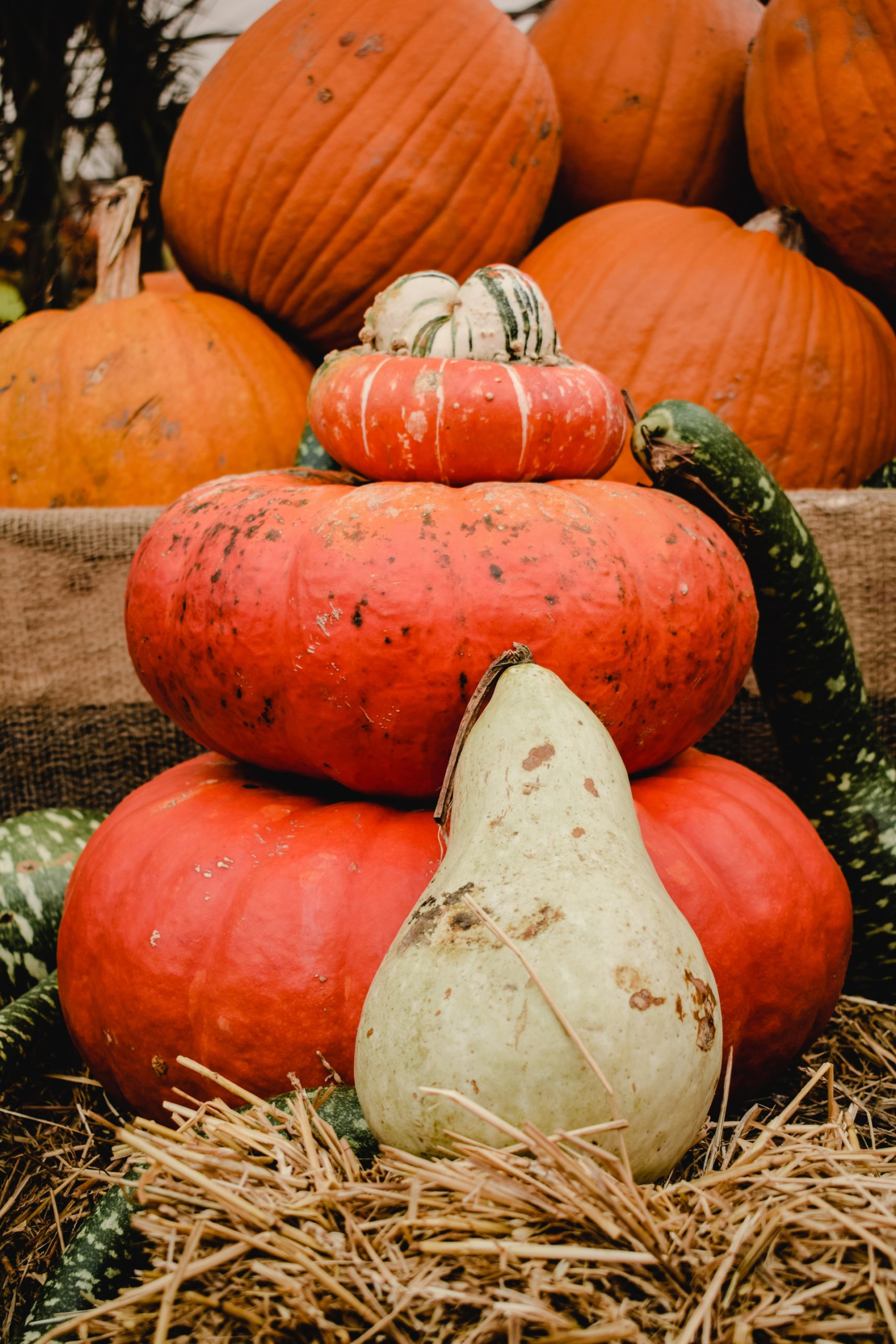 Photo of Stack of Flat Pumpkins