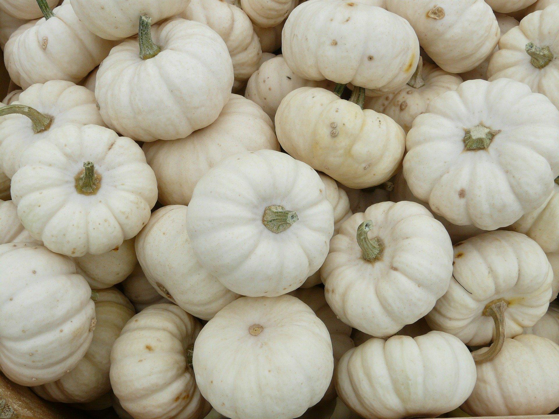 Photo of White Mini Pumpkins