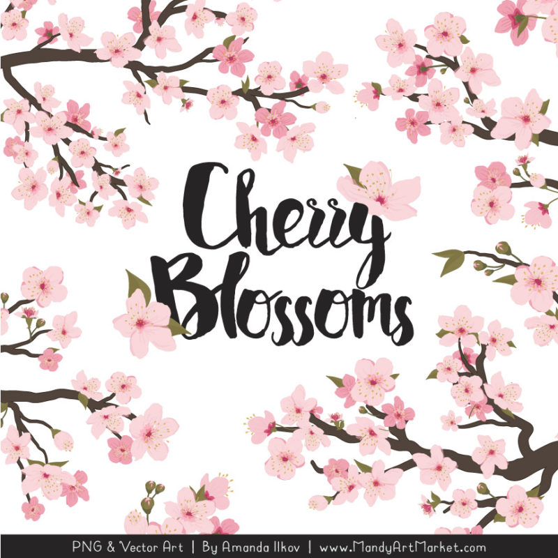 Free Cherry Blossom Clipart